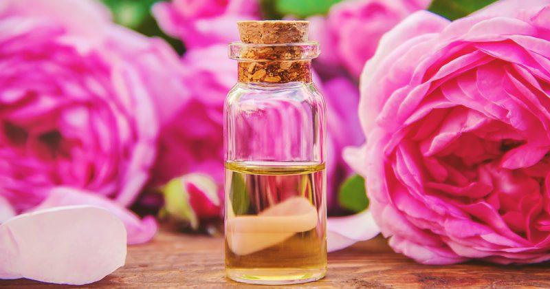 Els beneficis de l'oli de rosa mosqueta per a la pell